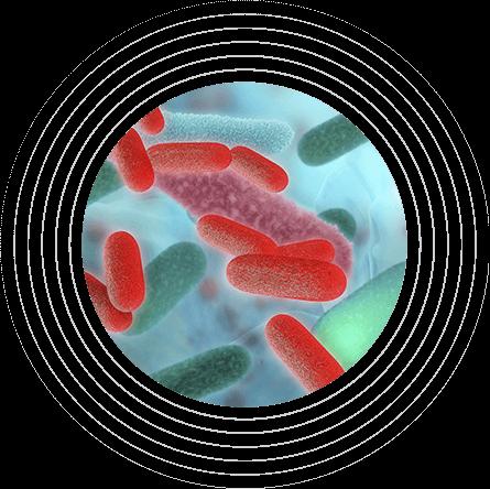 Μη ισορροπημένο μικροβίωμα